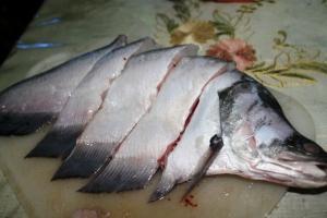 ikan belida belido pipih