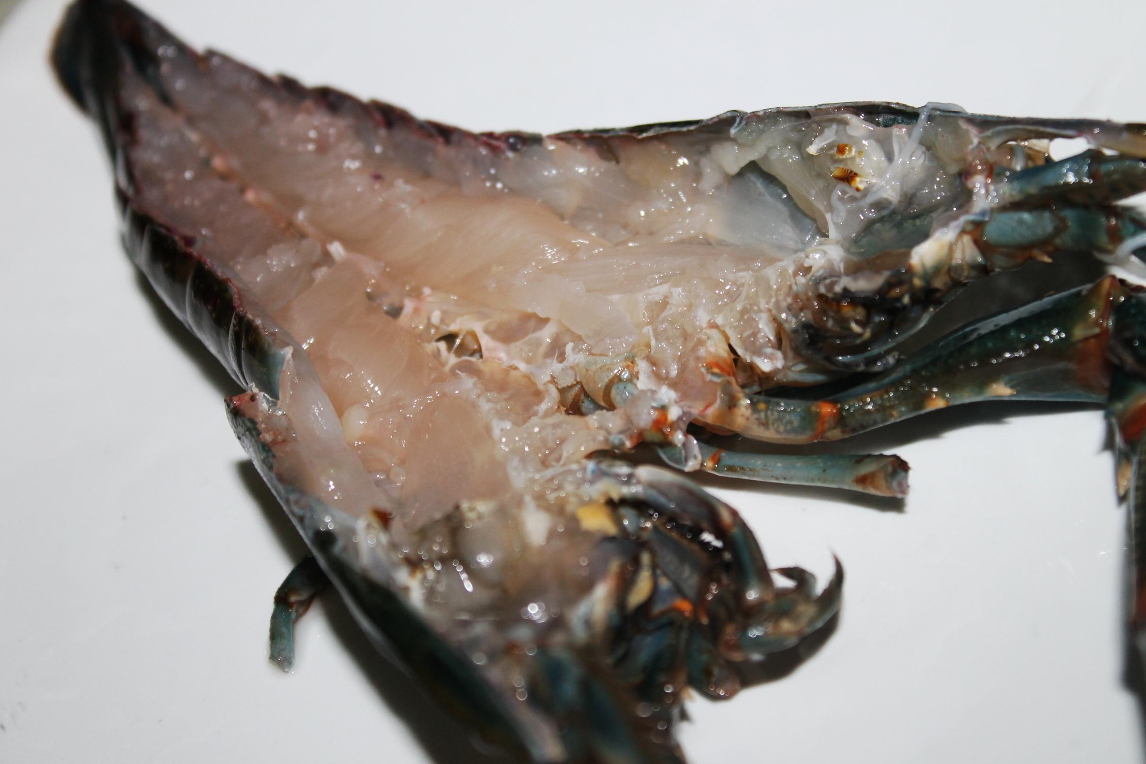 Olahan Lobster Air Tawar Dentist Chef