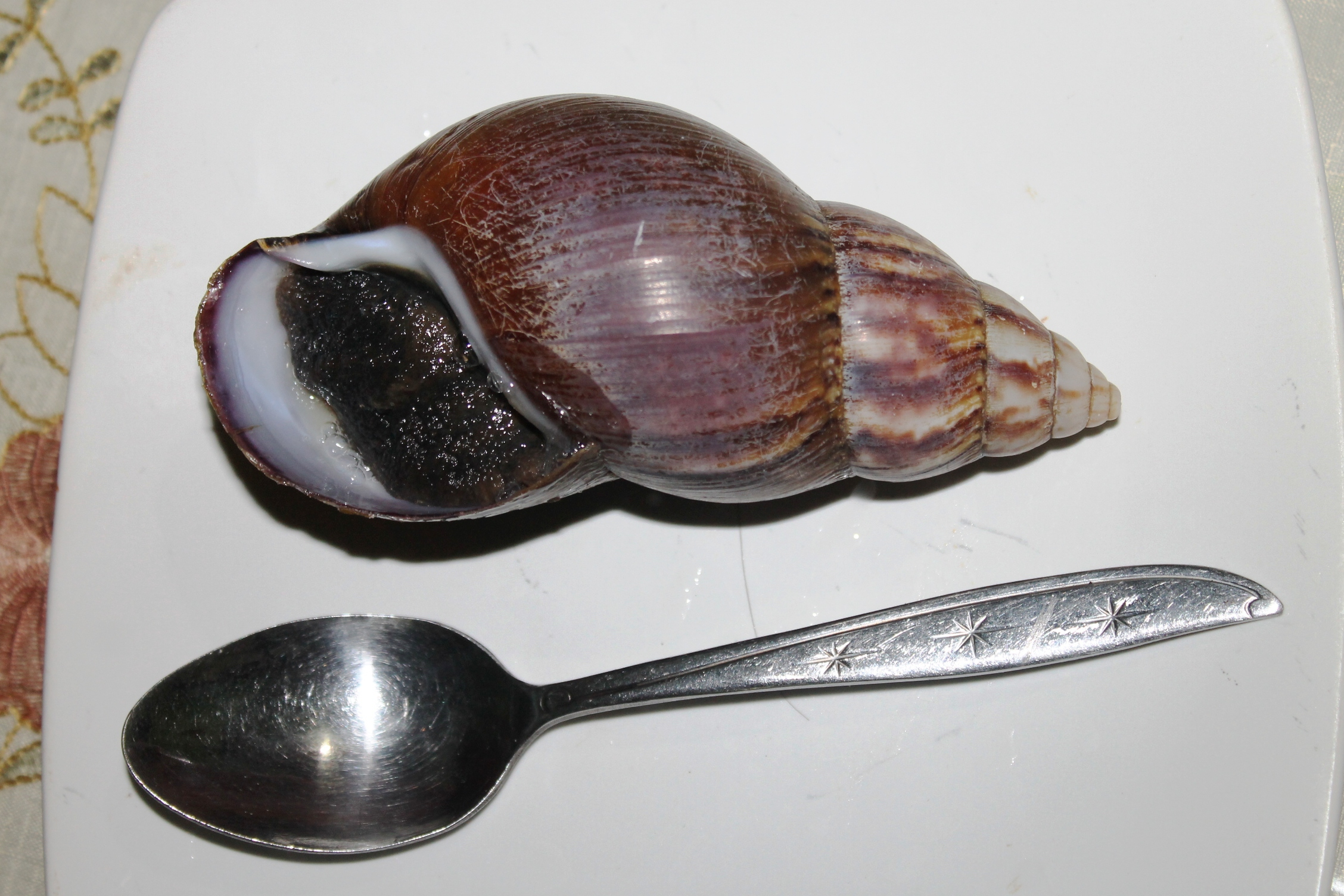 how to prepare snails for escargot