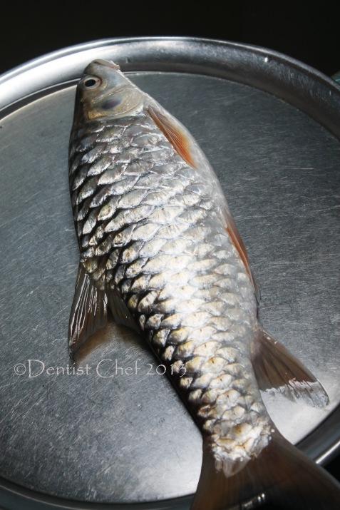 ikan batak ikan semah ikan empurau ikan kelah mahseer fish