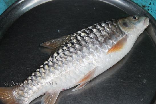 ikan semah ikan batak deke jurung jurung ikan kancra tombro curong