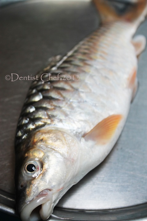 ikan semah, ikan empurau, mahseer fish, ikan batak