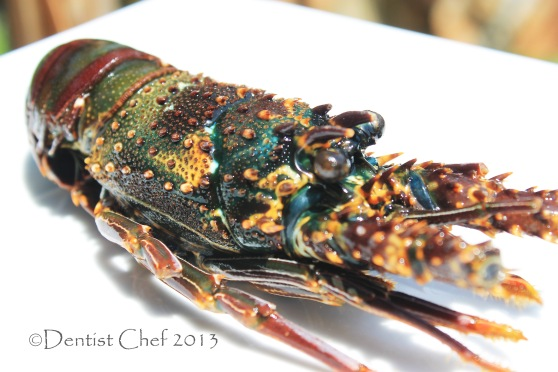 spinny lobster, rock lobster, lobster batu