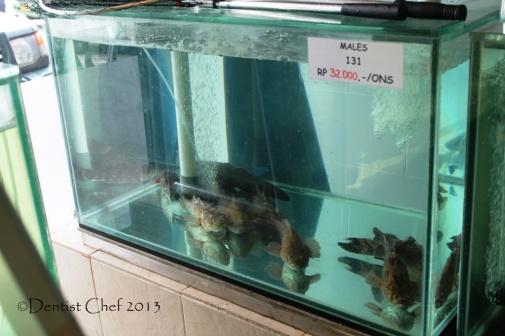 ikan betutu ikan malas mahal