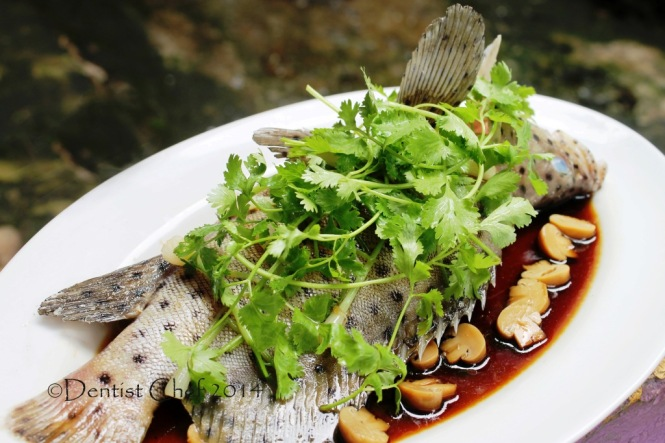 steamed live mouse grouper fish chinese style ginger garlic steamed mouse grouper humpback dotted steamed cod fish soy sauce