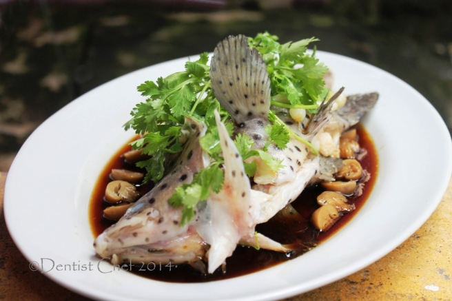 steamed mouse grouper fish chinese style steamed fish grouper humpback soy sauce ginger garlic steam live fish