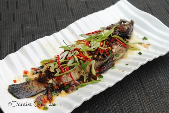 steamed grouper fish xo sauce chinese style steam rock cod red coral trout