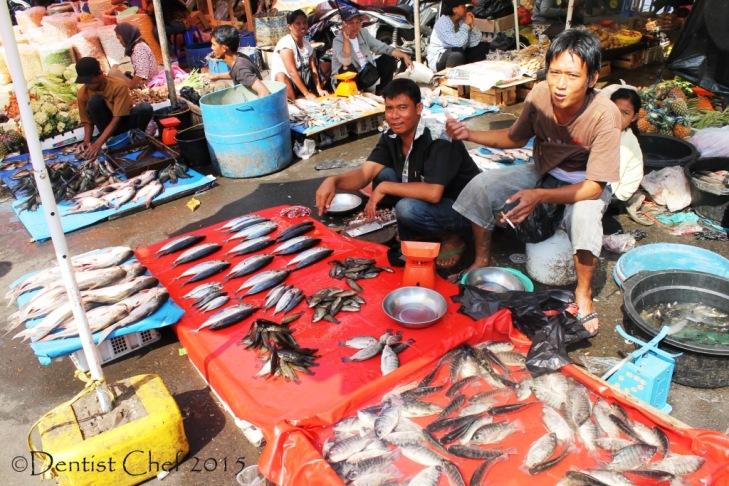 freshwater fish musi river south sumatra ikan sungai musi palembang agya