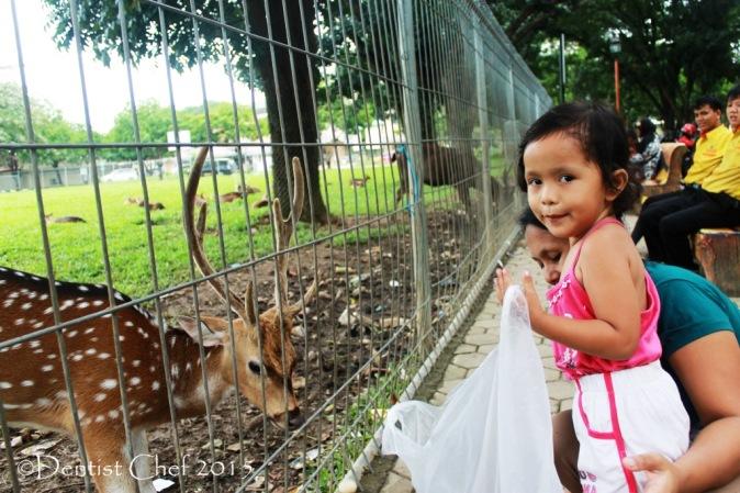 kandang rusa pt pusri kota palembang Toyoya Agya Blog Competition