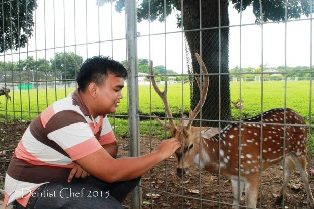 wisata kota palembang pusri rusa taman komplek pupuk sriwijaya agya blog competition