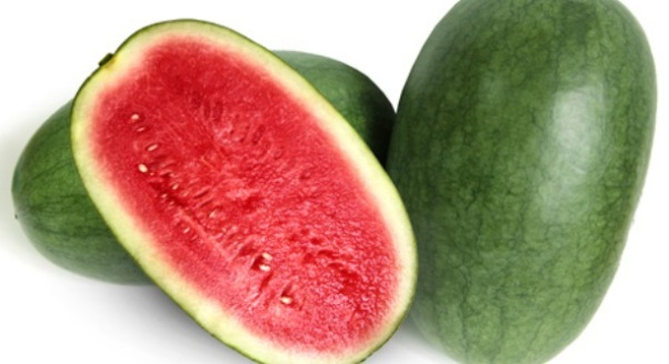sunpride semangka