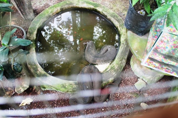 kebun binatang palembang ular punti kayu