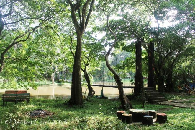 palembang punti kayu wisata air hutan lindung pinus