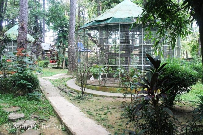 punti kayu kebun binatang