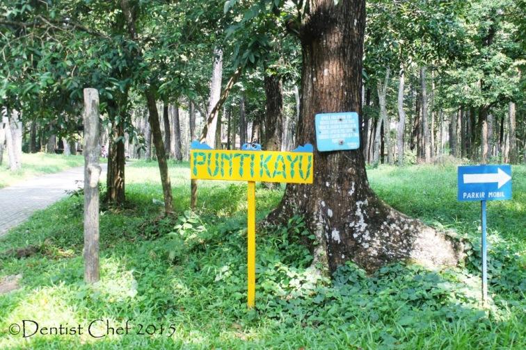 punti kayu palembang taman