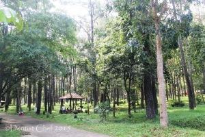 punti kayu palembang tempat wisata rekomendasi hutan pinus