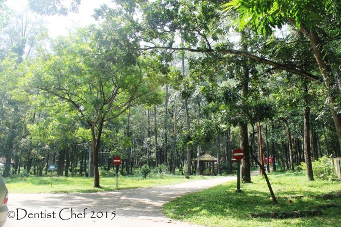 punti kayu palembang