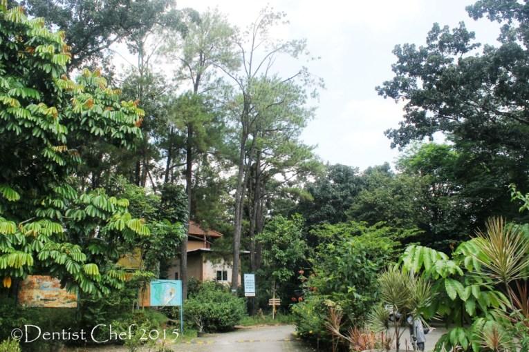 taman punti kayu wisata palembang alam hutan pinus